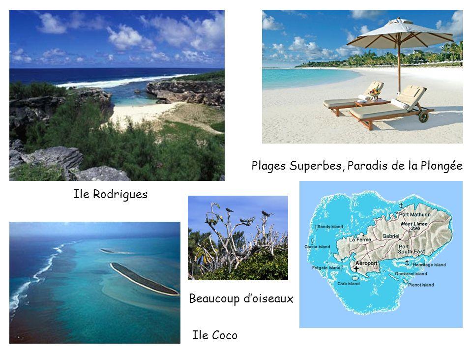 Ile Rodrigues Ile Coco Beaucoup doiseaux Plages Superbes, Paradis de la Plongée