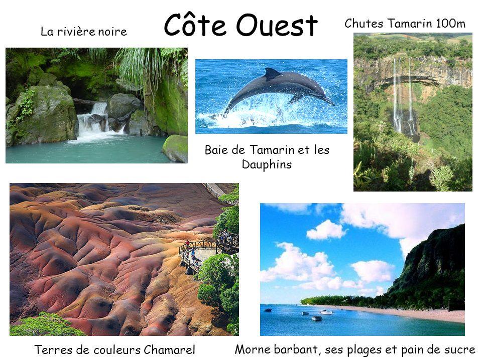 Côte Ouest Chutes Tamarin 100m La rivière noire Morne barbant, ses plages et pain de sucre Terres de couleurs Chamarel Baie de Tamarin et les Dauphins