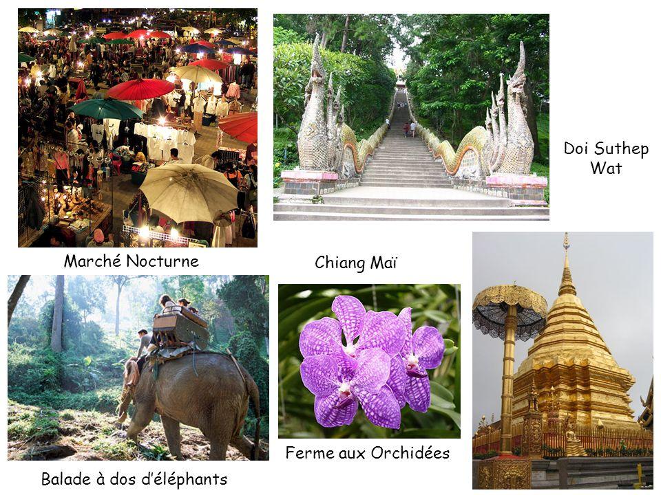 Chiang Maï Marché Nocturne Balade à dos déléphants Ferme aux Orchidées Doi Suthep Wat