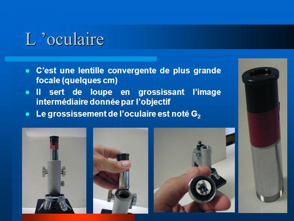 L objectif C est une lentille convergente de courte focale (quelques mm) Un objet placé à proximité de son foyer donne une image intermédiaire agrandie et renversée Le grandissement de l objectif est noté 1 Un dispositif de rotation permet de changer l objectif.