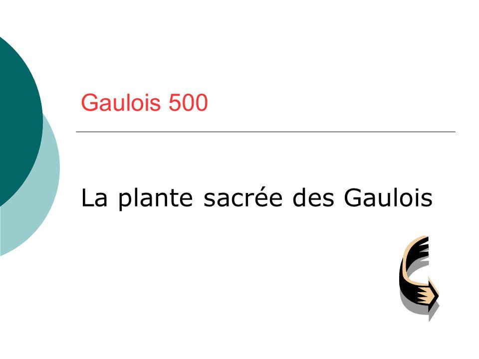Gaulois 500 La plante sacrée des Gaulois