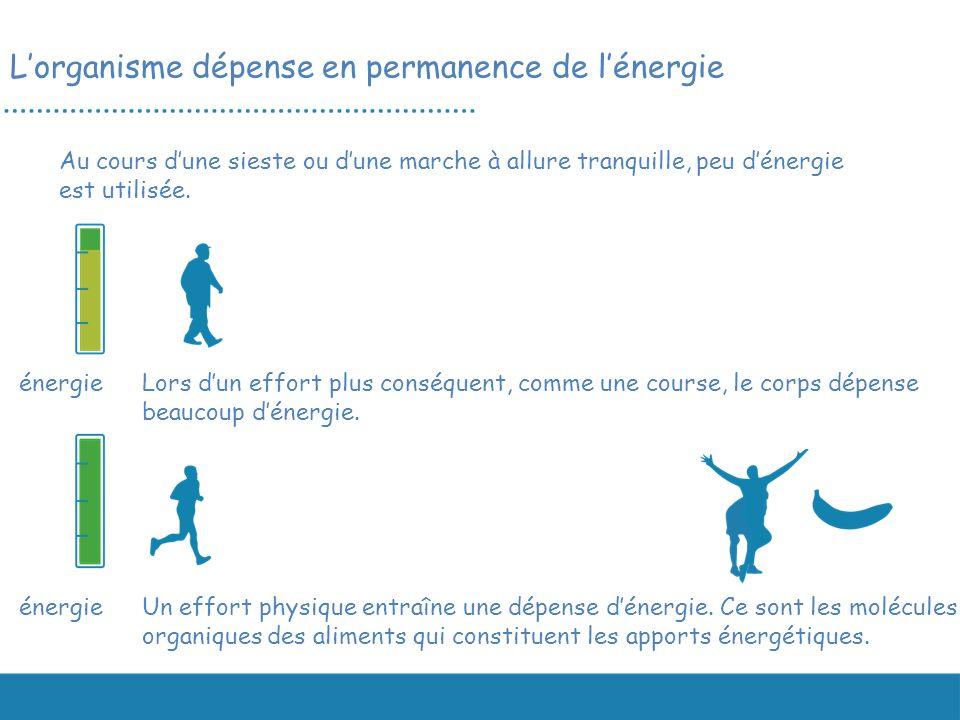 Un effort physique entraîne une dépense dénergie. Ce sont les molécules organiques des aliments qui constituent les apports énergétiques. énergie Au c