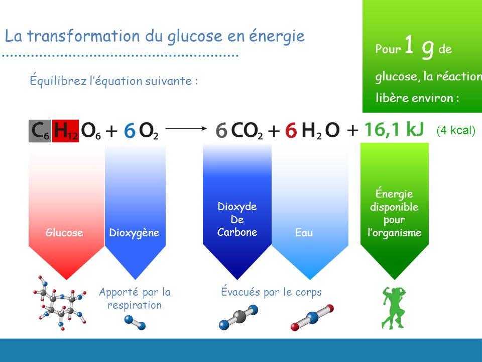 La transformation du glucose en énergie Équilibrez léquation suivante : GlucoseDioxygène Apporté par la respiration Dioxyde De Carbone Énergie disponi