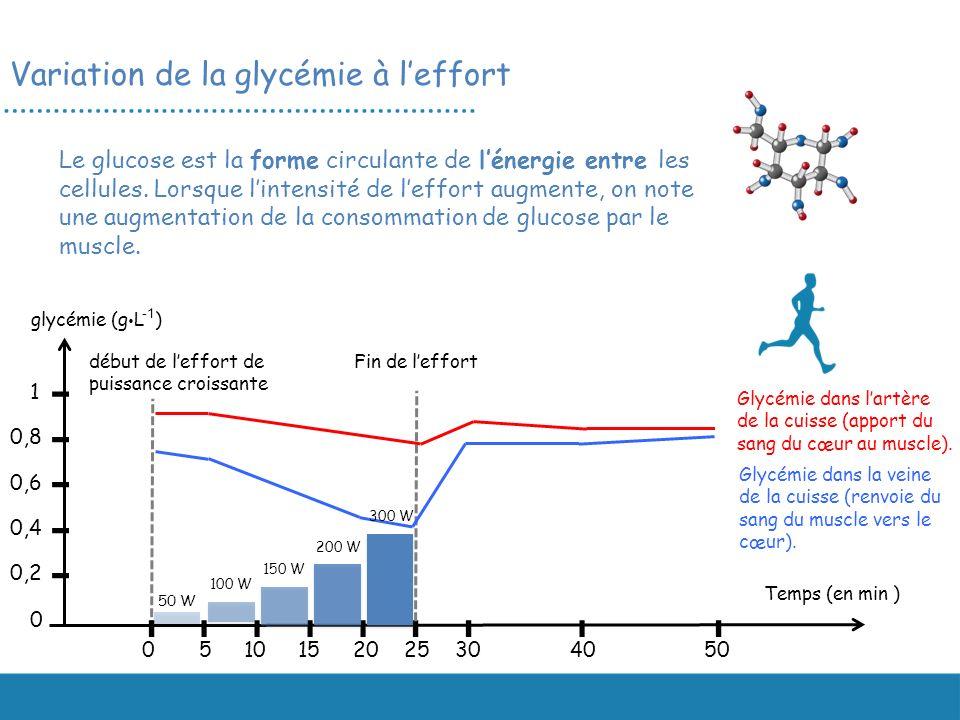 Le glucose est la forme circulante de lénergie entre les cellules. Lorsque lintensité de leffort augmente, on note une augmentation de la consommation