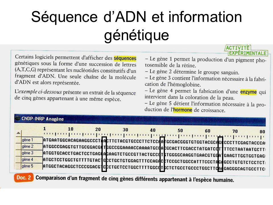 Séquence dADN et information génétique