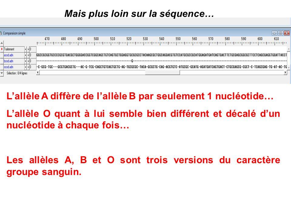 Mais plus loin sur la séquence… Lallèle A diffère de lallèle B par seulement 1 nucléotide… Lallèle O quant à lui semble bien différent et décalé dun n
