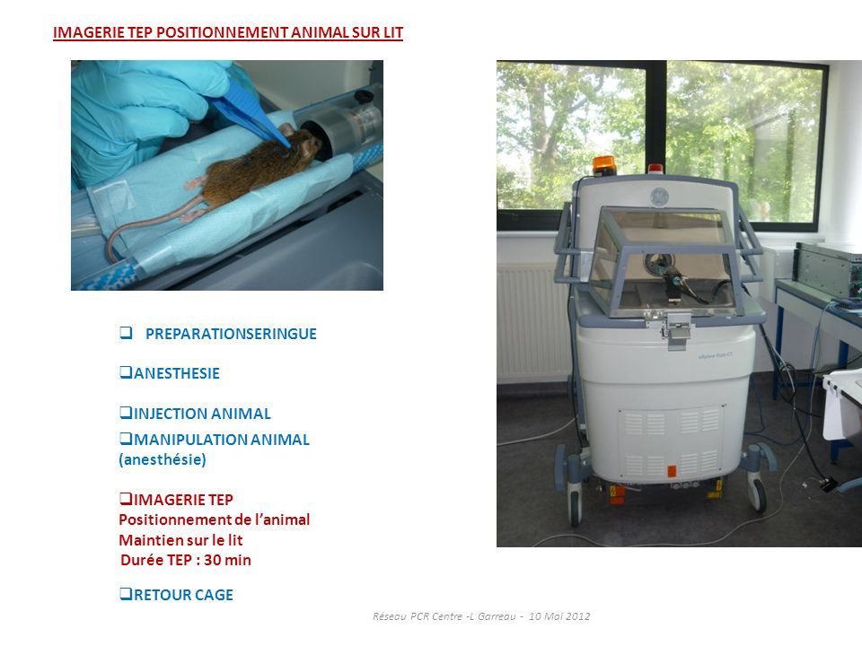 IMAGERIE TEP POSITIONNEMENT ANIMAL SUR LIT PREPARATIONSERINGUE ANESTHESIE INJECTION ANIMAL MANIPULATION ANIMAL (anesthésie) IMAGERIE TEP Positionnemen