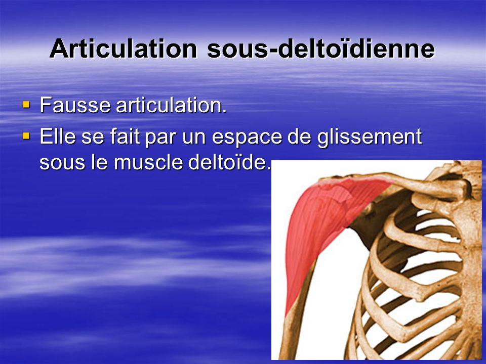 Articulation sous-deltoïdienne Fausse articulation. Fausse articulation. Elle se fait par un espace de glissement sous le muscle deltoïde. Elle se fai