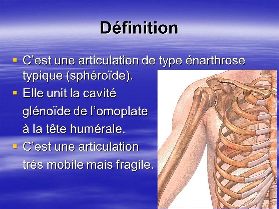 Définition Cest une articulation de type énarthrose typique (sphéroïde). Cest une articulation de type énarthrose typique (sphéroïde). Elle unit la ca