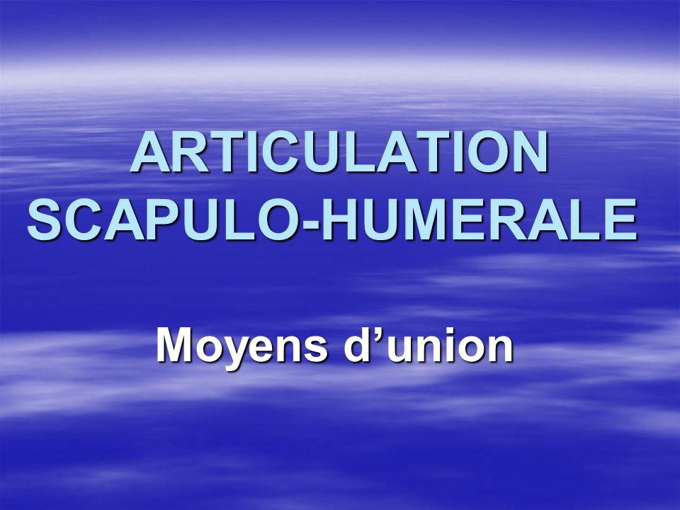 ARTICULATION SCAPULO-HUMERALE ARTICULATION SCAPULO-HUMERALE Moyens dunion Moyens dunion