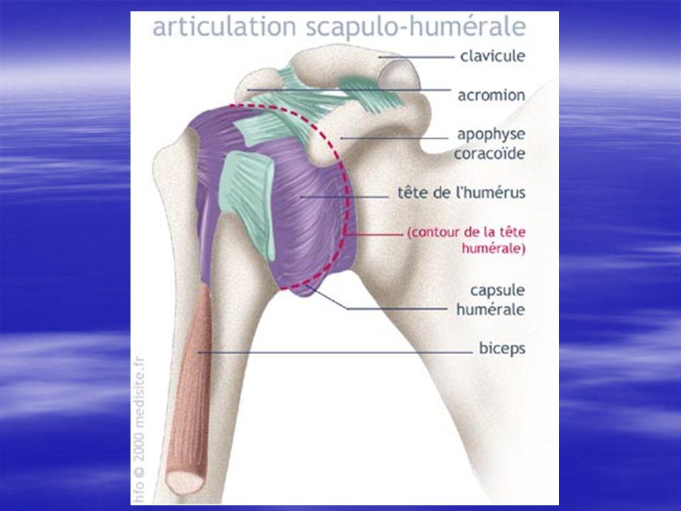 Ligaments passifs (1) Au nombre de 2: Au nombre de 2: Ligament coraco-huméral : Ligament coraco-huméral : –Le plus résistant.