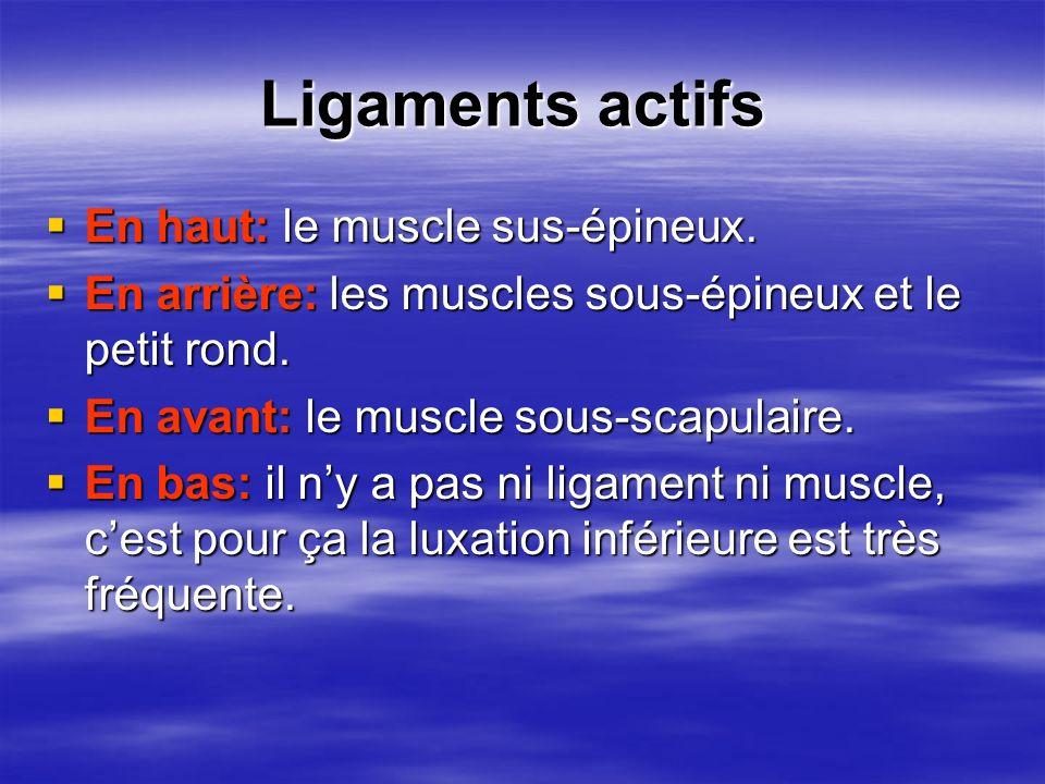 Ligaments actifs Ligaments actifs En haut: le muscle sus-épineux. En haut: le muscle sus-épineux. En arrière: les muscles sous-épineux et le petit ron