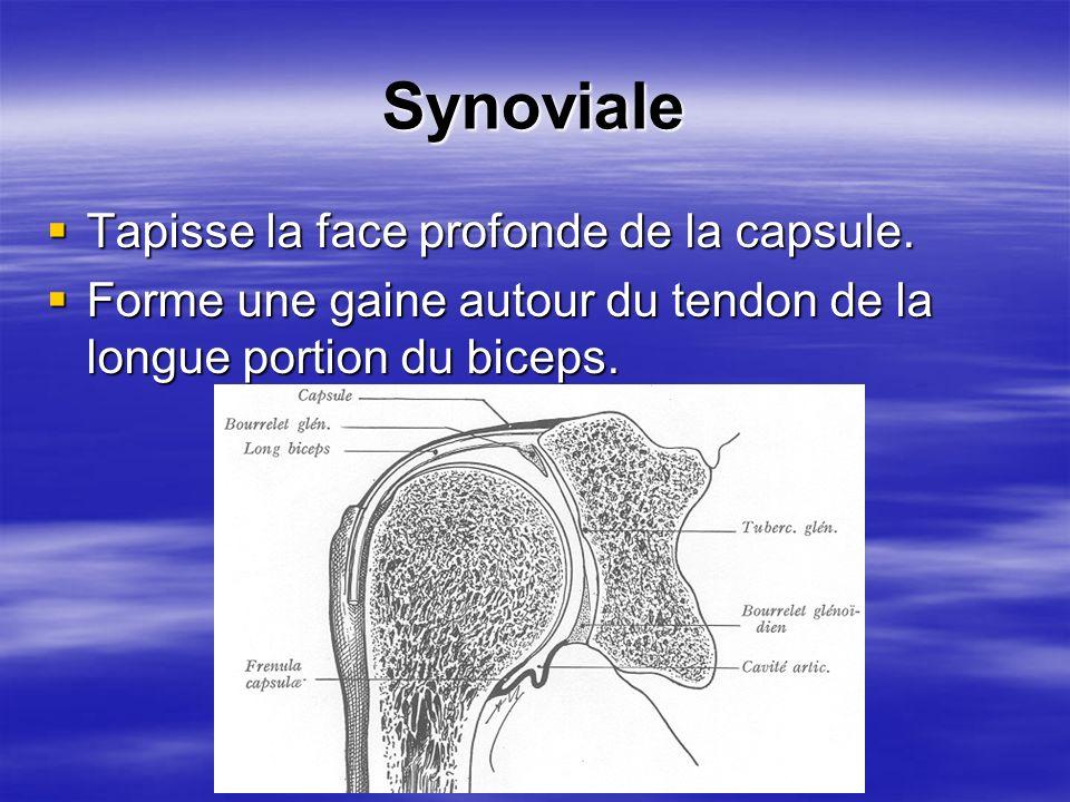 Synoviale Tapisse la face profonde de la capsule. Tapisse la face profonde de la capsule. Forme une gaine autour du tendon de la longue portion du bic