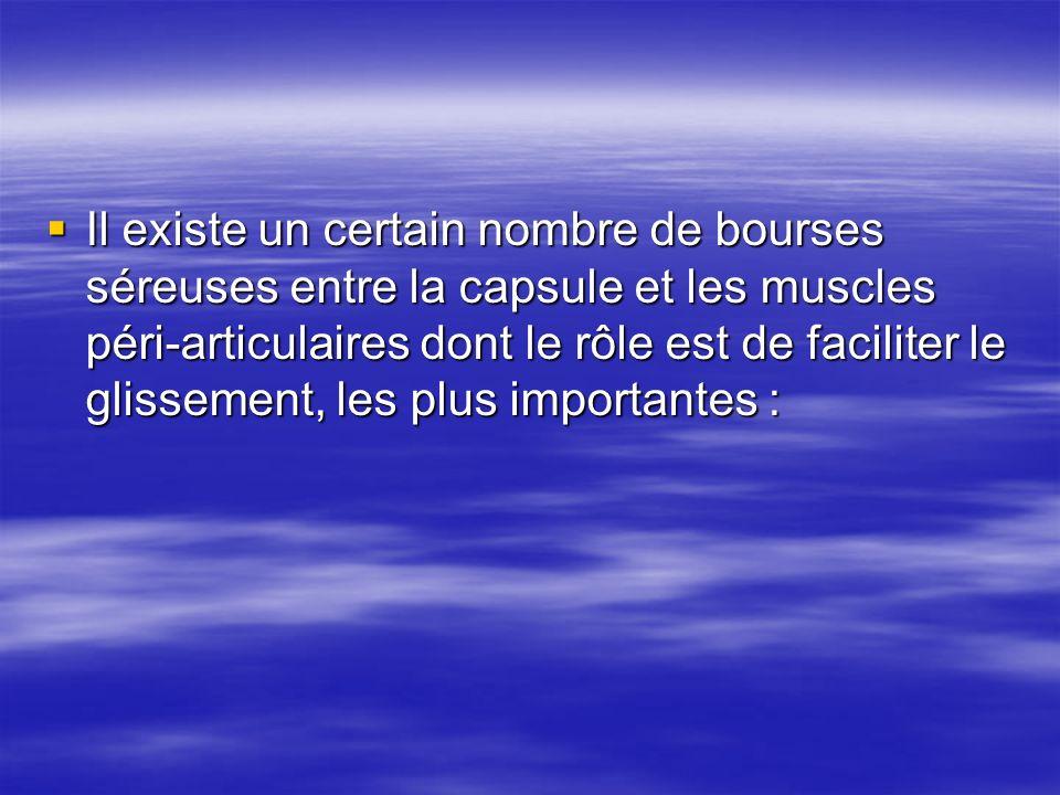 Il existe un certain nombre de bourses séreuses entre la capsule et les muscles péri-articulaires dont le rôle est de faciliter le glissement, les plu