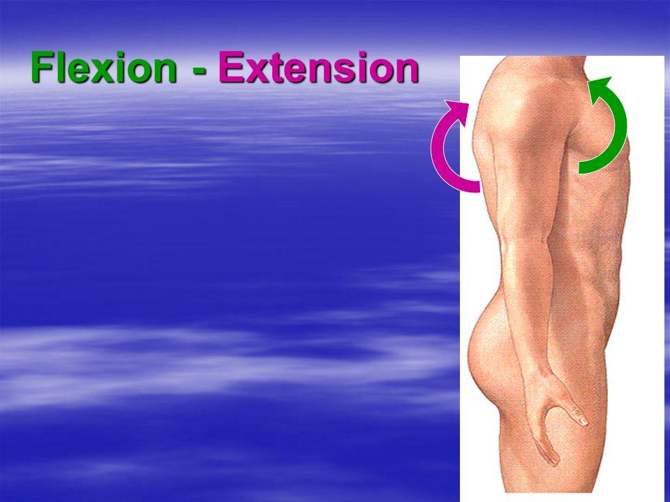 Flexion - Extension