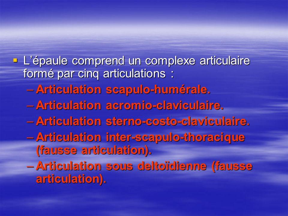 Lépaule comprend un complexe articulaire formé par cinq articulations : Lépaule comprend un complexe articulaire formé par cinq articulations : –Artic