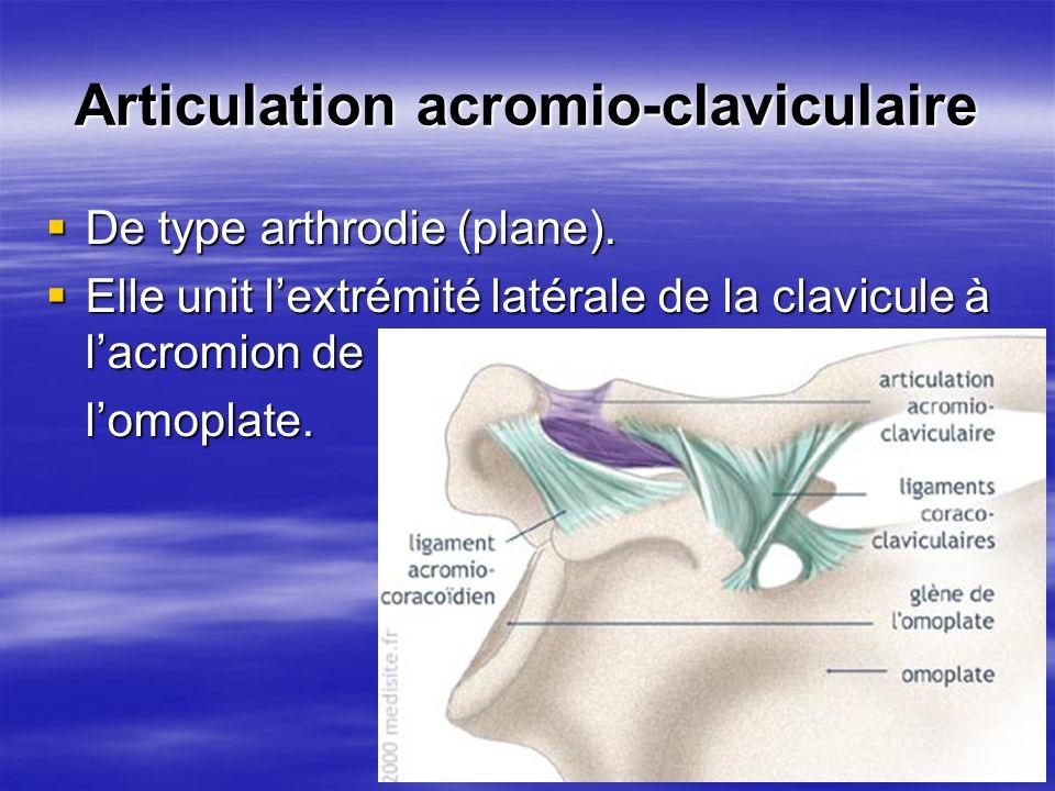 Articulation acromio-claviculaire De type arthrodie (plane). De type arthrodie (plane). Elle unit lextrémité latérale de la clavicule à lacromion de E
