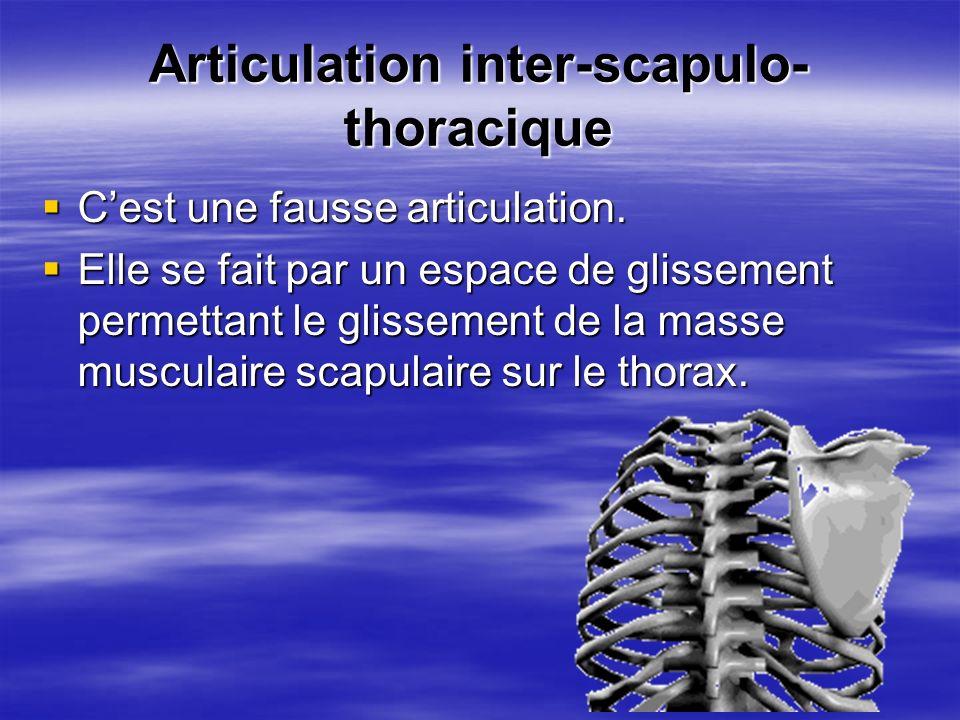 Articulation inter-scapulo- thoracique Cest une fausse articulation. Cest une fausse articulation. Elle se fait par un espace de glissement permettant