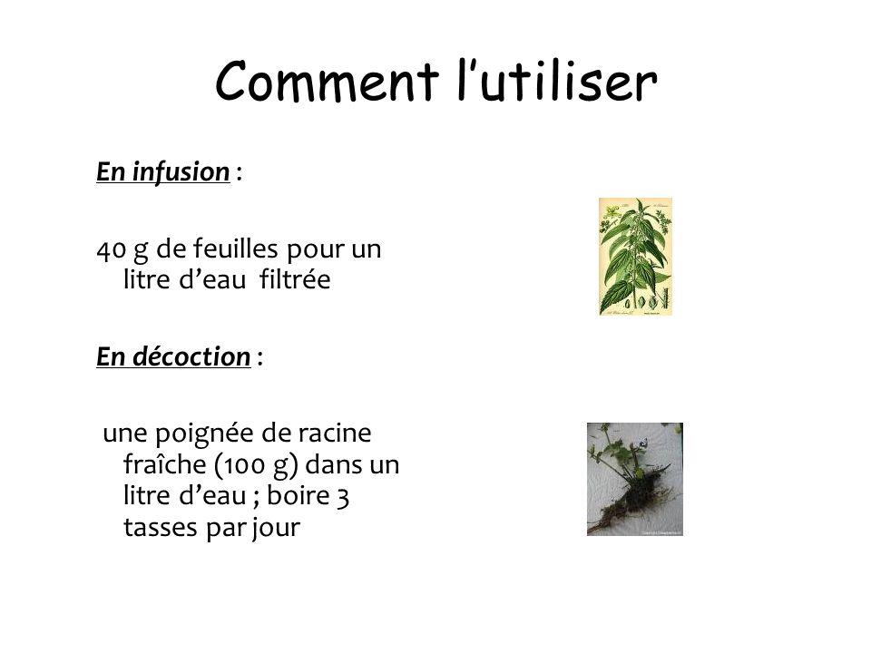 Comment lutiliser En infusion : 40 g de feuilles pour un litre deau filtrée En décoction : une poignée de racine fraîche (100 g) dans un litre deau ;