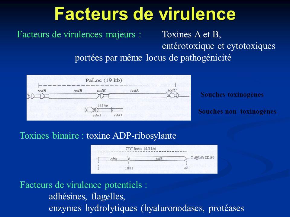 Facteurs de virulence Facteurs de virulences majeurs :Toxines A et B, entérotoxique et cytotoxiques portées par même locus de pathogénicité Toxines bi