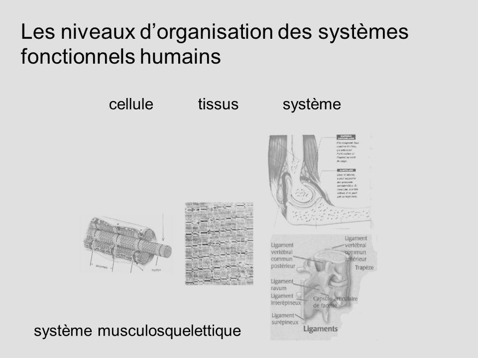 Les niveaux dorganisation des systèmes fonctionnels humains cellule tissus système système musculosquelettique