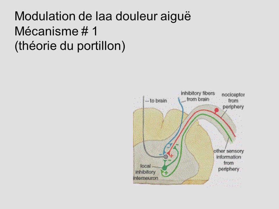 Modulation de laa douleur aiguë Mécanisme # 1 (théorie du portillon)