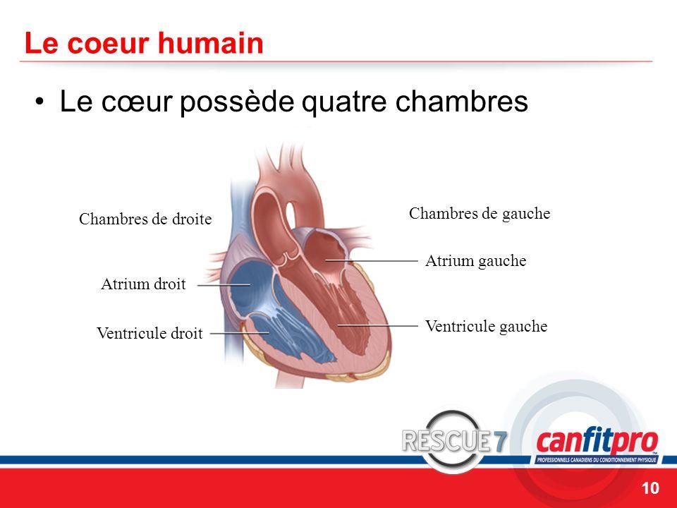 CPR Course Level 1 Le coeur humain Le cœur possède quatre chambres 10 Chambres de droite Chambres de gauche Atrium droit Atrium gauche Ventricule gauc
