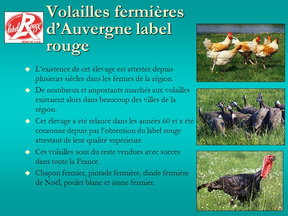 Volailles fermières dAuvergne label rouge Lexistence de cet élevage est attestée depuis plusieurs siècles dans les fermes de la région.