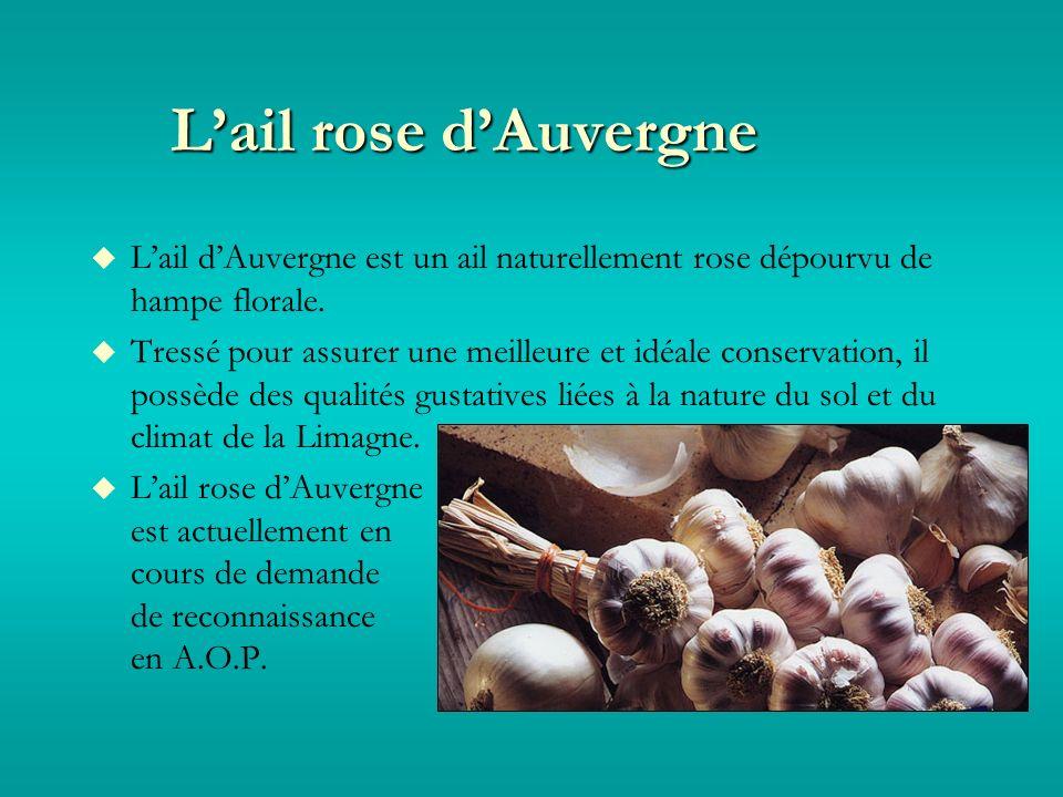 Lail rose dAuvergne Lail dAuvergne est un ail naturellement rose dépourvu de hampe florale.