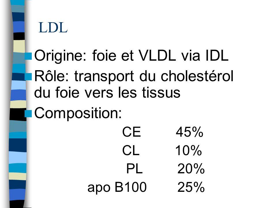 LDL Origine: foie et VLDL via IDL Rôle: transport du cholestérol du foie vers les tissus Composition: CE 45% CL 10% PL 20% apo B100 25%