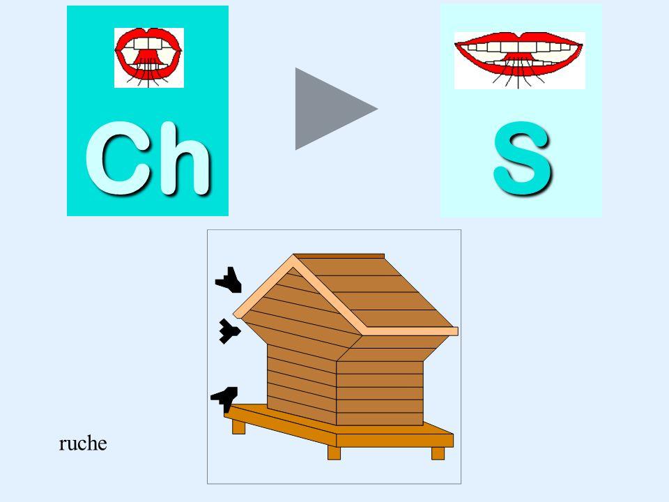 quiche Ch SSSS quiche