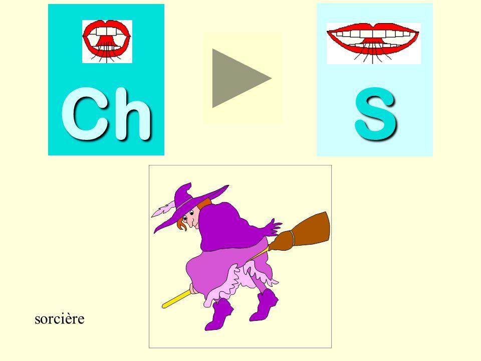 chiffon Ch SSSS chiffon
