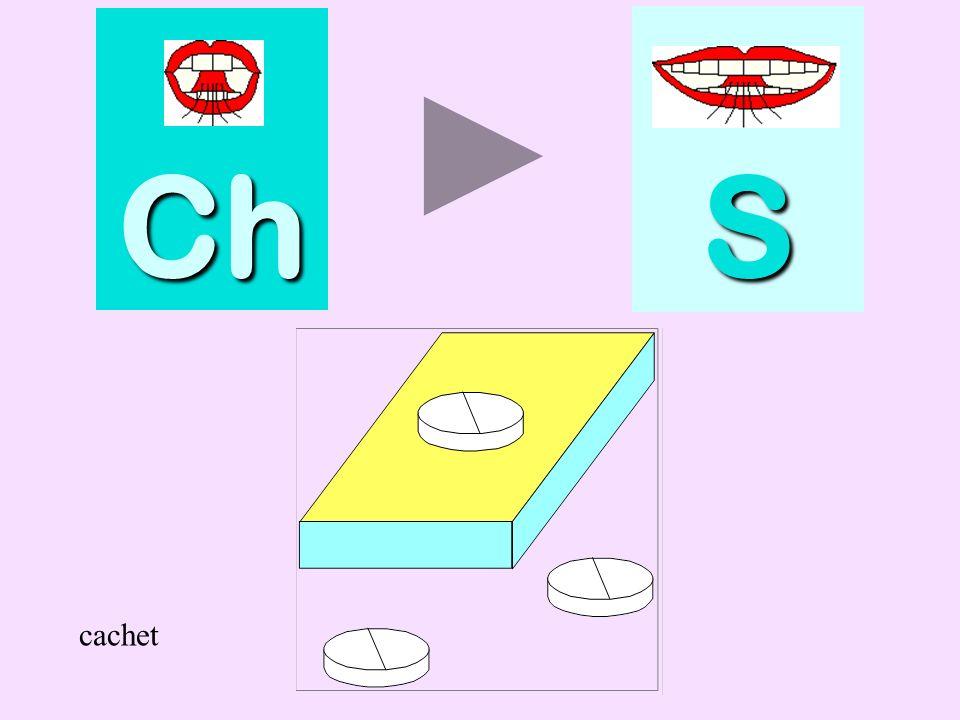 cachalot Ch SSSS cachalot