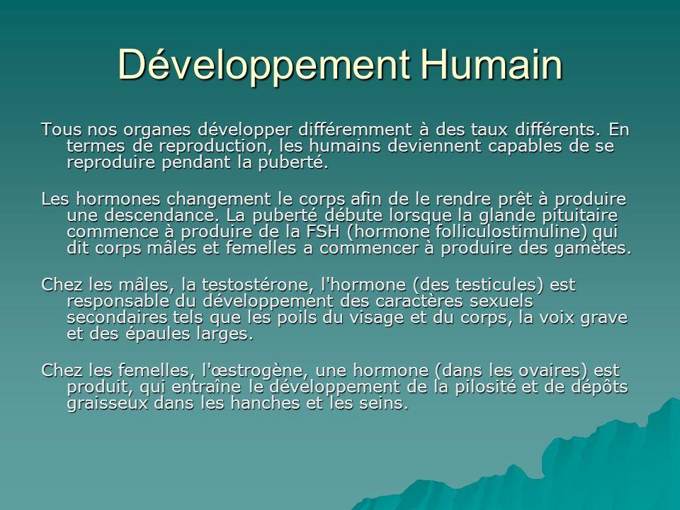 Développement Humain Tous nos organes développer différemment à des taux différents. En termes de reproduction, les humains deviennent capables de se