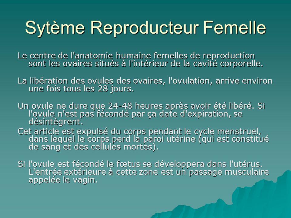 Sytème Reproducteur Femelle Le centre de l'anatomie humaine femelles de reproduction sont les ovaires situés à l'intérieur de la cavité corporelle. La