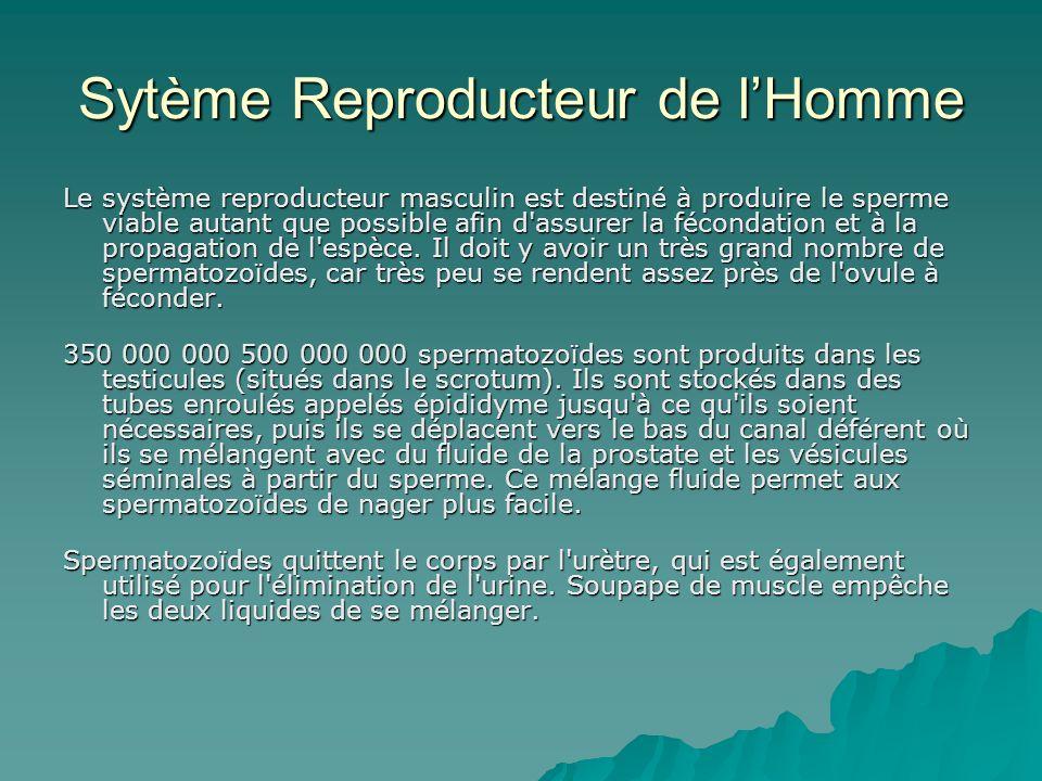 Sytème Reproducteur de lHomme Le système reproducteur masculin est destiné à produire le sperme viable autant que possible afin d'assurer la fécondati