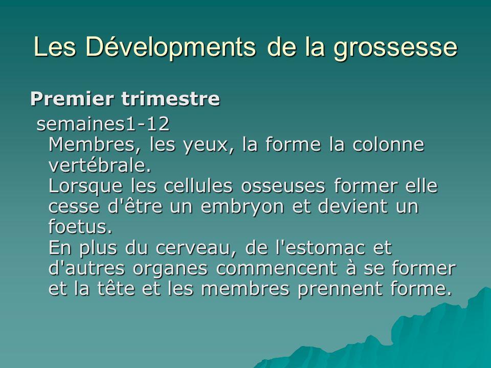 Les Dévelopments de la grossesse Premier trimestre semaines1-12 Membres, les yeux, la forme la colonne vertébrale. Lorsque les cellules osseuses forme