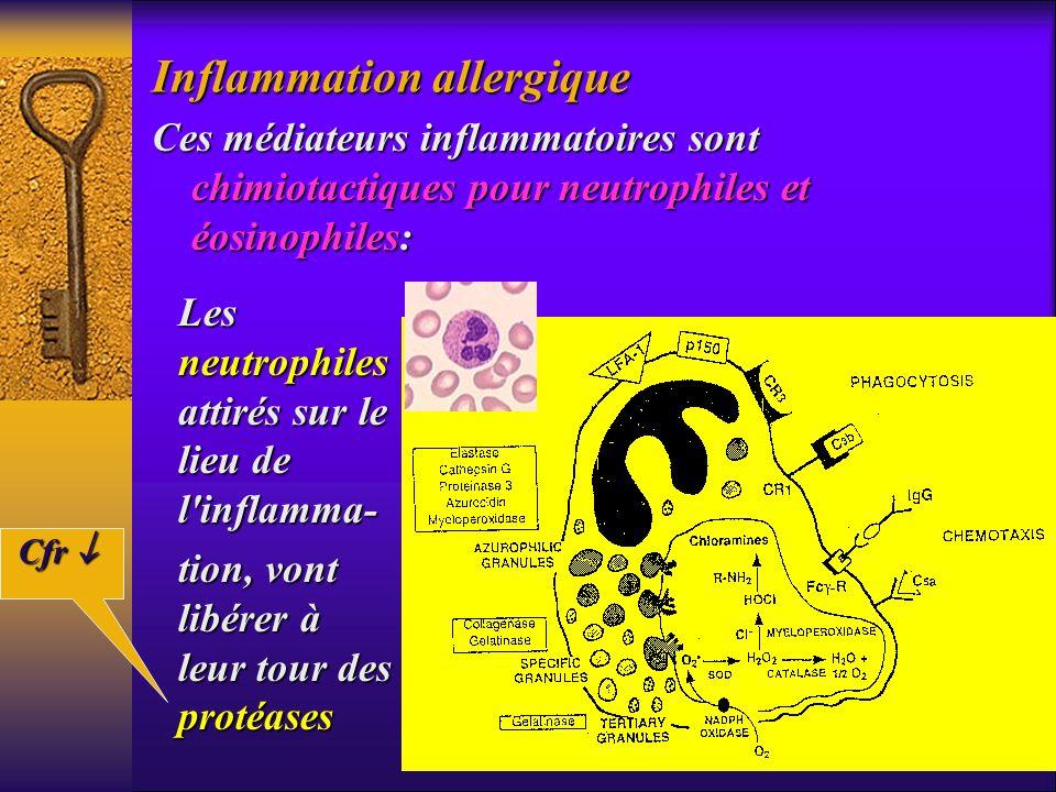 Ces médiateurs inflammatoires sont chimiotactiques pour neutrophiles et éosinophiles: Les neutrophiles attirés sur le lieu de l'inflamma- tion, vont l