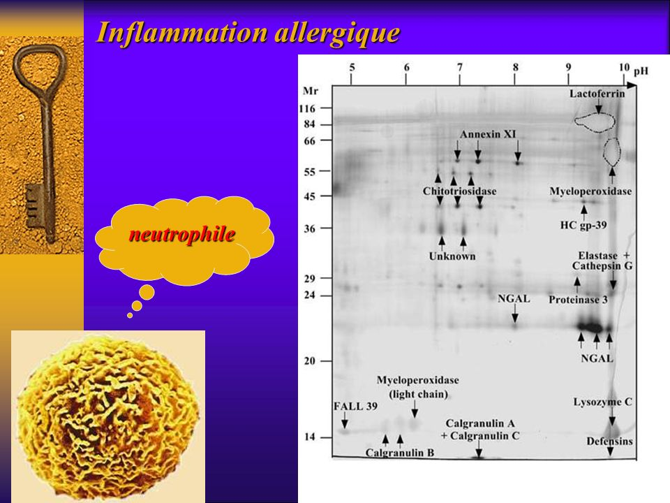 Inflammation allergique neutrophile