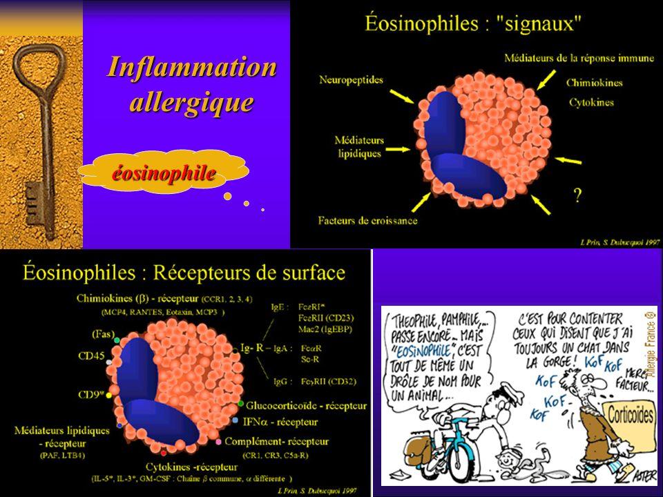 Inflammation Inflammation allergique allergique éosinophile