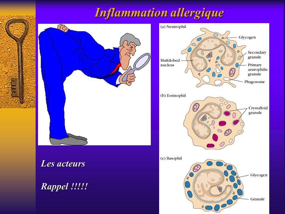 Inflammation allergique Les acteurs Rappel !!!!!