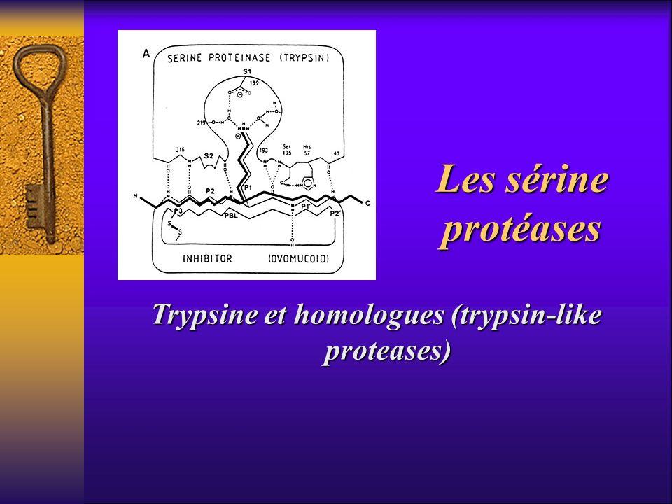 Les sérine protéases Trypsine et homologues (trypsin-like proteases)