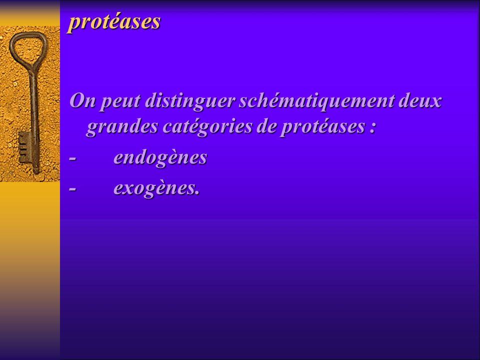 protéases On peut distinguer schématiquement deux grandes catégories de protéases : - endogènes - exogènes.