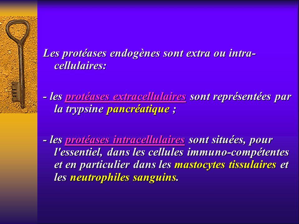 Les protéases endogènes sont extra ou intra- cellulaires: - les protéases extracellulaires sont représentées par la trypsine pancréatique ; - les prot