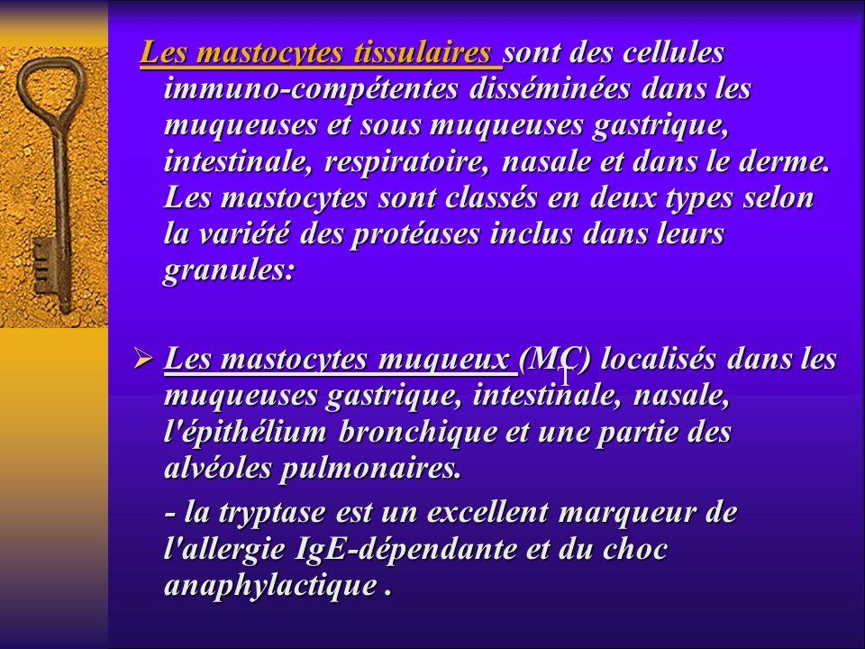Les mastocytes tissulaires sont des cellules immuno-compétentes disséminées dans les muqueuses et sous muqueuses gastrique, intestinale, respiratoire,
