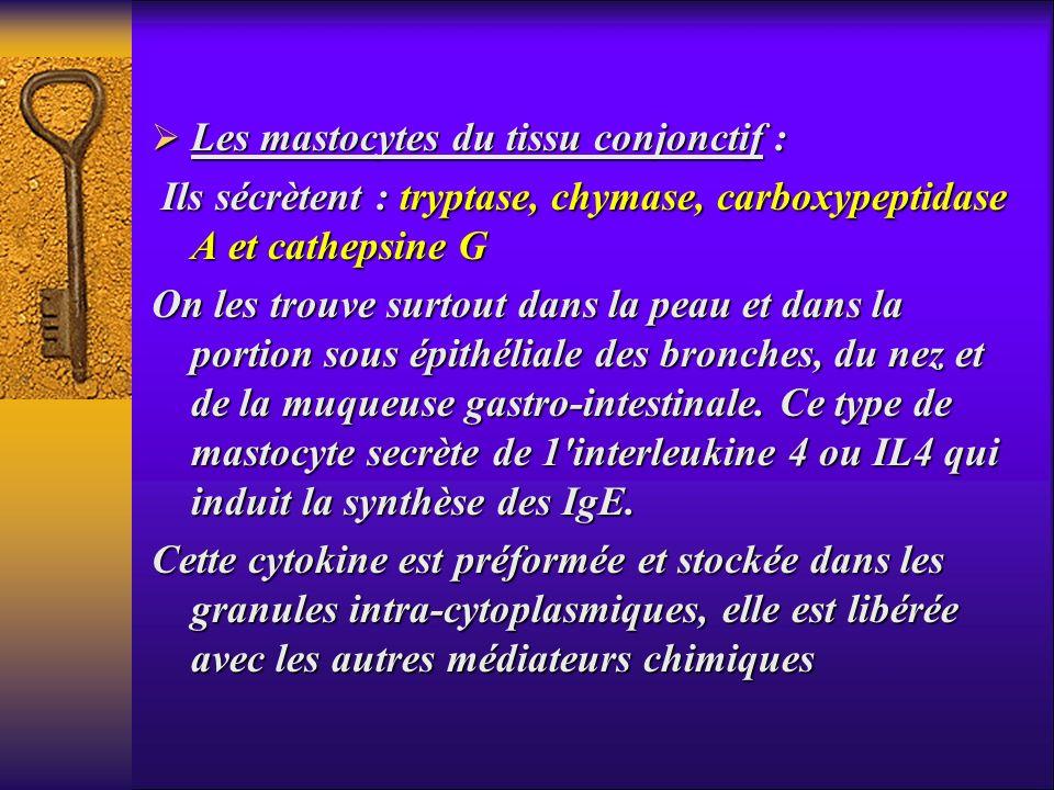 Les mastocytes du tissu conjonctif : Les mastocytes du tissu conjonctif : Ils sécrètent : tryptase, chymase, carboxypeptidase A et cathepsine G Ils sé