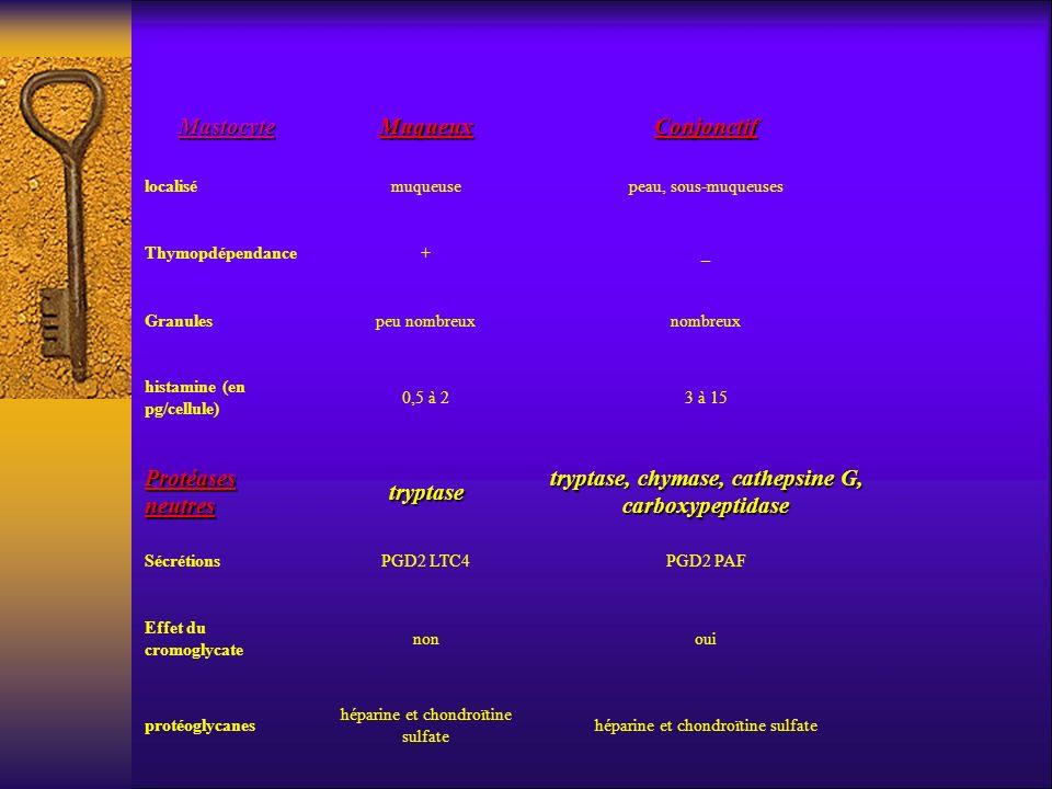 MastocyteMuqueuxConjonctif localisémuqueusepeau, sous-muqueuses Thymopdépendance+_ Granulespeu nombreuxnombreux histamine (en pg/cellule) 0,5 à 23 à 1