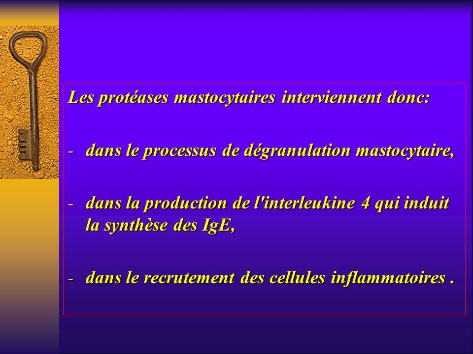 Les protéases mastocytaires interviennent donc: - dans le processus de dégranulation mastocytaire, - dans la production de l'interleukine 4 qui induit