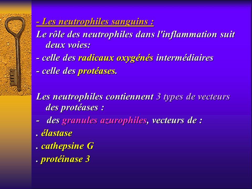 - Les neutrophiles sanguins : Le rôle des neutrophiles dans l'inflammation suit deux voies: - celle des radicaux oxygénés intermédiaires - celle des p
