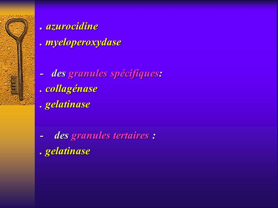 . azurocidine. myeloperoxydase - des granules spécifiques:. collagénase. gelatinase - des granules tertaires :. gelatinase